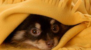 cachorro-medo-fogos-de-artificio