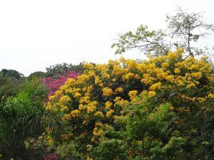 foto 6 jardinagem