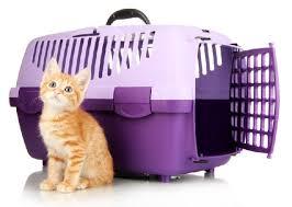 viajar gato