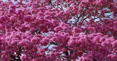 árvores1