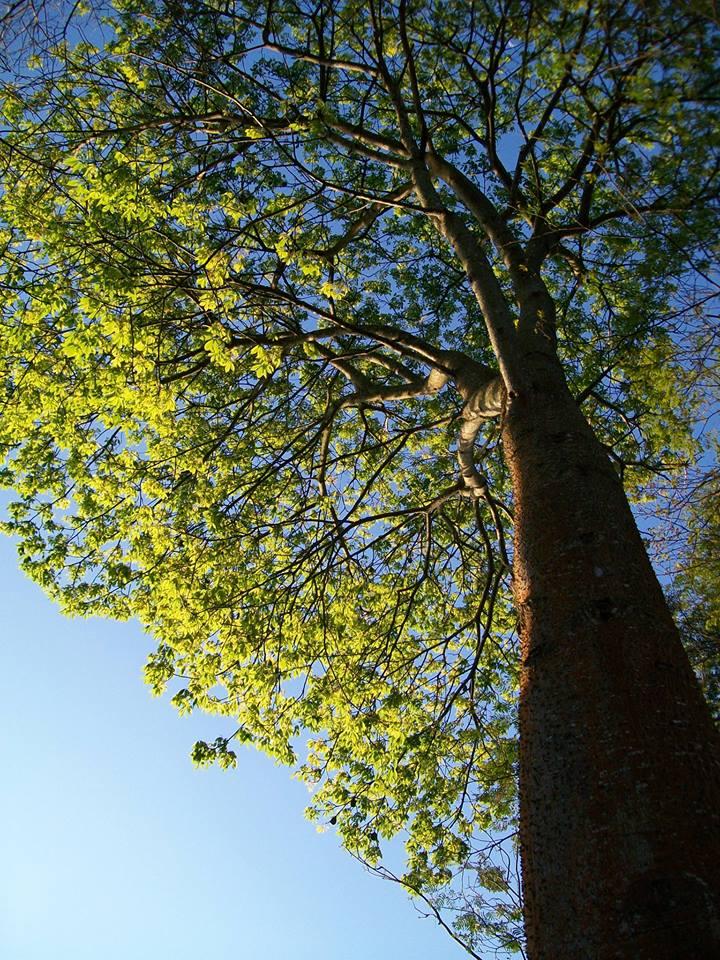 árvores3