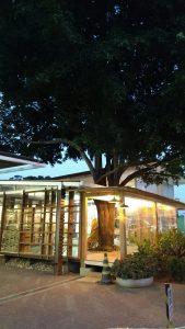 """A futura """"Vendinha"""" de Paula Gomes ficará no espaço que inclui uma árvore dentro"""