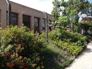 Implantação paisagística em calçada por Geni Albuquerque